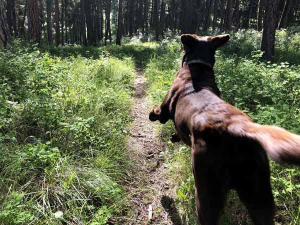 Bring a Dog on a hike