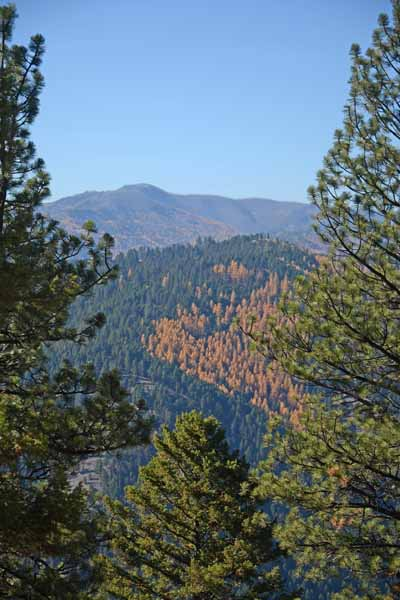 Trail 10 in autumn