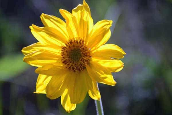 Trail 10 wildflowers