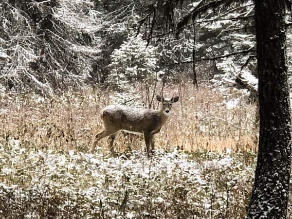 Hunting Rock Creek near Missoula, Montana